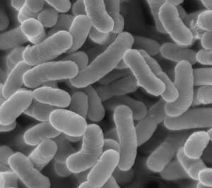 花粉症に効く乳酸菌画像