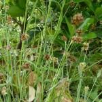 イネ科花粉症の時期と症状は咳、肌荒れ、目のかゆみ