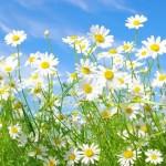 花粉症の目のかゆみにアロマは効果ある?クリームは?