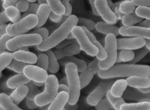 乳酸菌サプリ画像