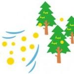 スギ花粉2016いつから飛んでる?飛散状況期間や情報や暖冬の影響は?