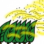 花粉症2017年のピーク時期はいつから?対策予想や症状は?