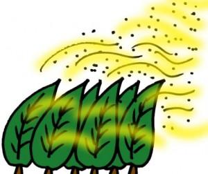 花粉症2017の飛散画像