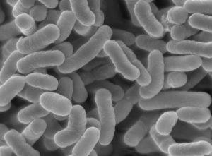 花粉症に効果がある乳酸菌画像